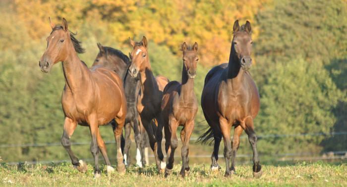 konie-11