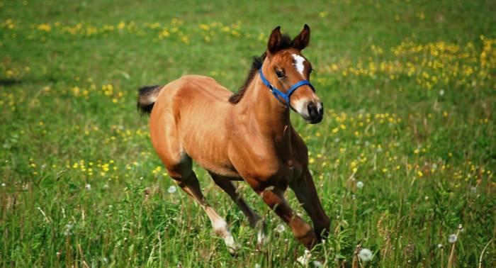 konie-14