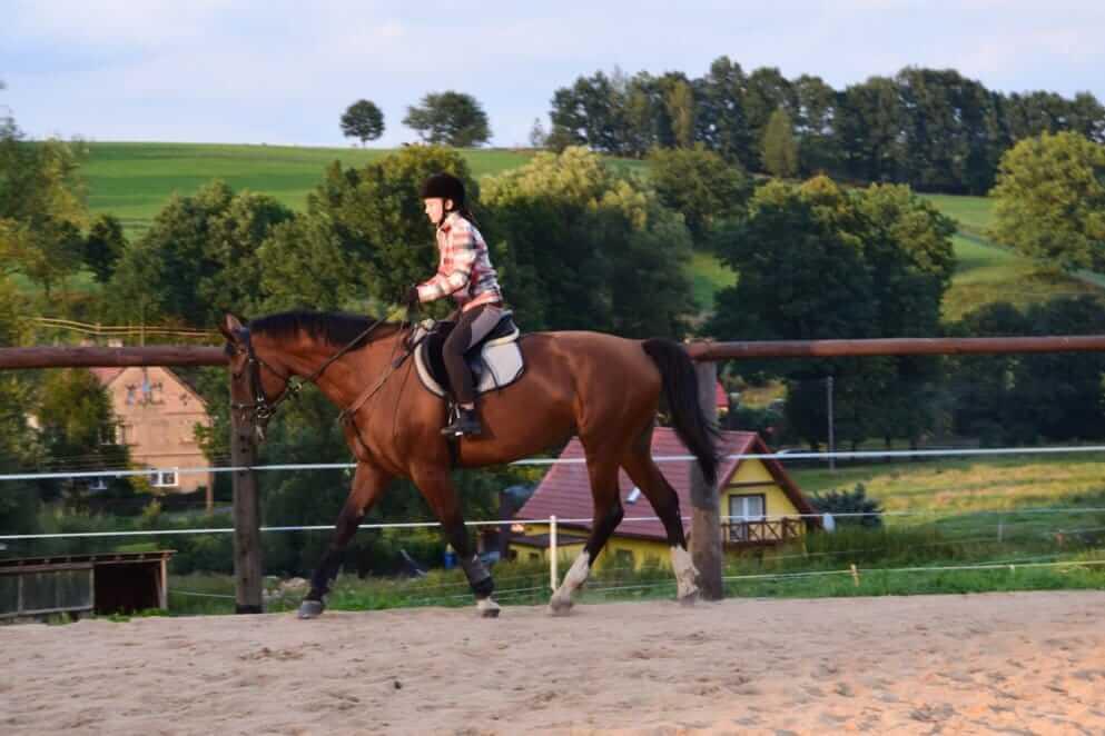 konie-4