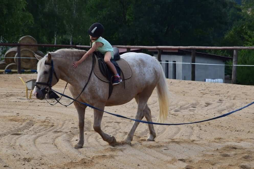 konie-8