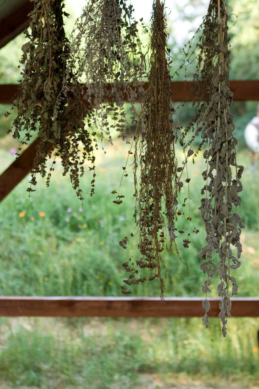 Zielone Labolatorium Warsztaty