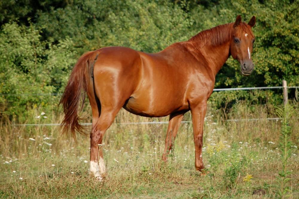 Inez hodowla koni dolnośląskie
