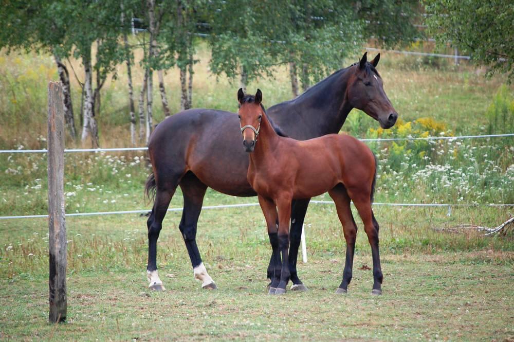 Scharlotte hodowla koni dolnośląskie
